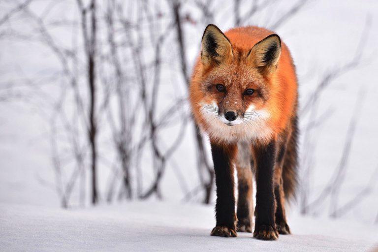 fox-710454-1200